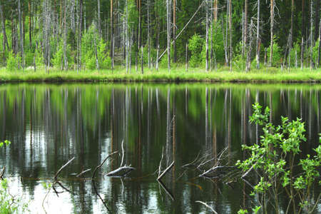 Beautiful small lake in the forest with reflections on water