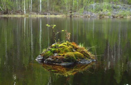Stone with moss and leaves inside the river with reflections Zdjęcie Seryjne