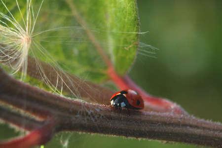 Close view of a Ladybug on a leaf. Beautiful nature background Zdjęcie Seryjne