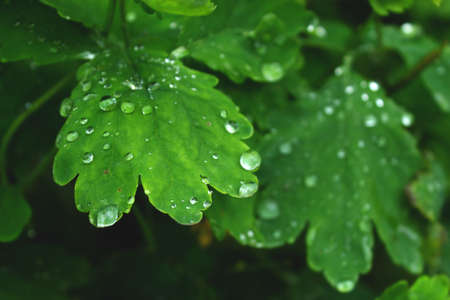 Close view on the fresh green leaf with water drops after rain