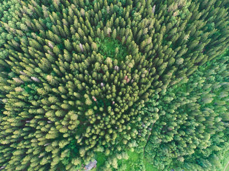 Aerial view of green boreal forest filled with spruce trees