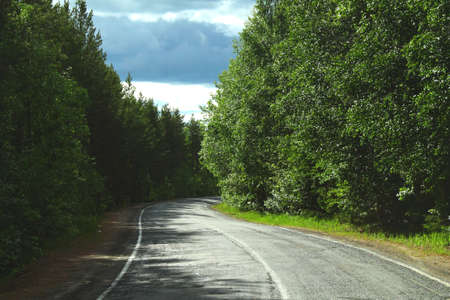 Road uphill in the forest during the summer