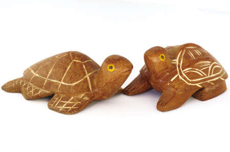Turtle souvenir photo