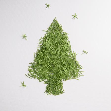 Green tree of the needles Stock Photo