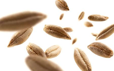 Rye grains levitate on a white background 版權商用圖片