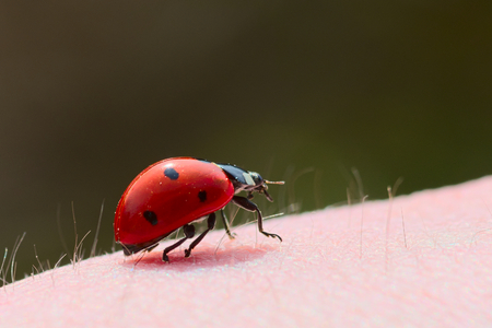 Ladybug crawling on a persons arm