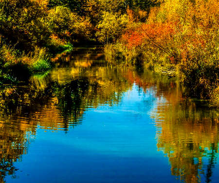 Fall colours in a pond, Calgary, Alberta, Canada Stock Photo