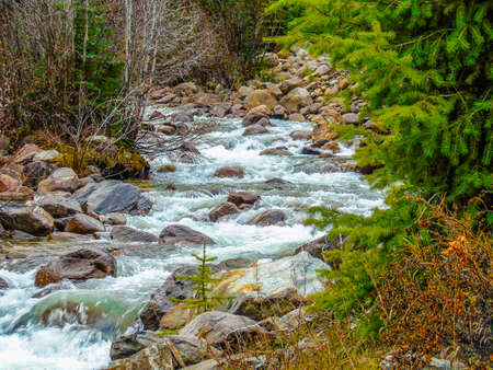 Creekside, Mount Robson Provincial Park, British Columbia, Canada Stock Photo