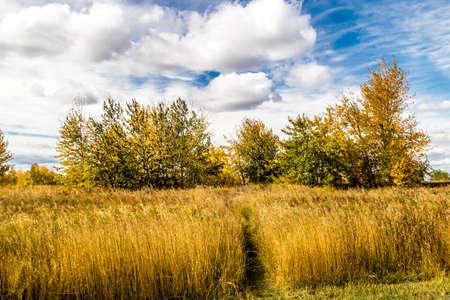 Fall in all it's colourful glory, Calgary, Alberta, Canada