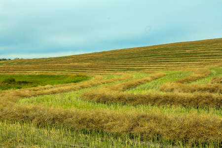 Hedge rows in a field, Kneehill County, Alberta, Canada 写真素材