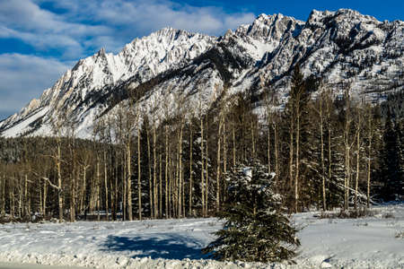 A white coat of snow paints the rees with a new colour at the hillsdale meadows in banff
