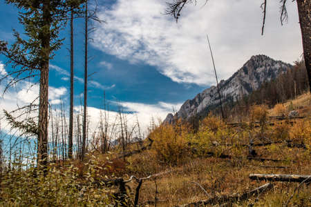 Fall colours abound in early october in Banff National Park Stock Photo