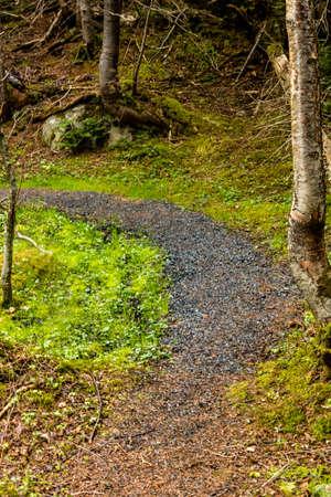 Mattie Mitchell Trail, Gros Morne National Park, Newfoundland, Canada Stock Photo