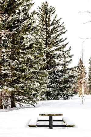 Views from a winter stroll around Baker Park, Calgary, Alberta, Canada 版權商用圖片