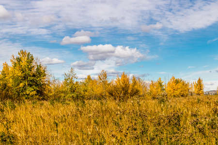 fall colours are highlighted by fluffy white clouds and blue skies