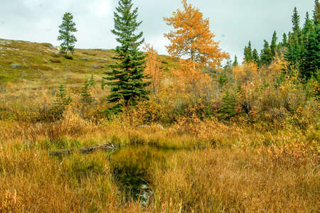 fall colours and the yellows it brings only serves to enhance the landscape