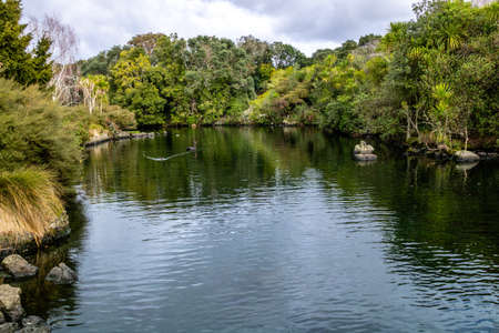 Western Springs Pond is home to many species of ducks and waterfowl, , Auckland, New Zealand Stock Photo