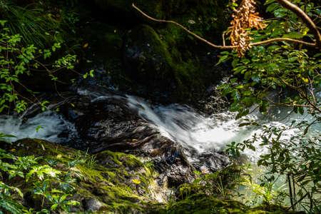 The Waiau creek makes its way toward the falls, Waiau Kauri Grove, Coromandel, New Zealand