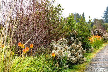 A tour around the reserve, Dunham Point Reserve, Kinleith, New Zealand