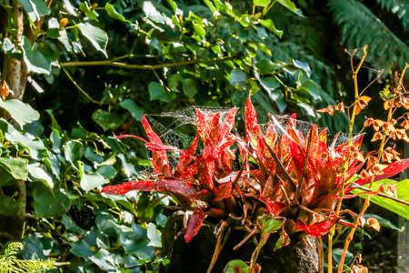 Walkways, flowers, trees and streams make for a pleasant walk through the Pukeiti Gardens, Taranaki, New Zealand