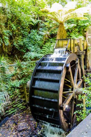 A strole through the Pukekura Park botanical gardens. New Plymouth, Taranaki, New Zealand