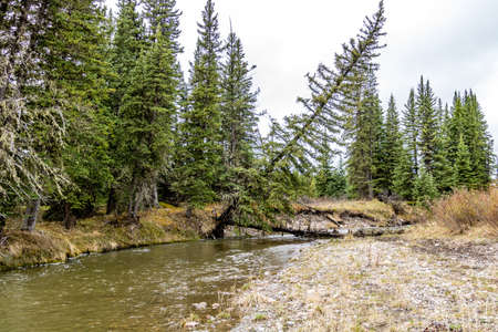 Elk Creek as summer turns to fall. Elk Creek Provincial Recreation Area, Alberta, Canada Stock Photo