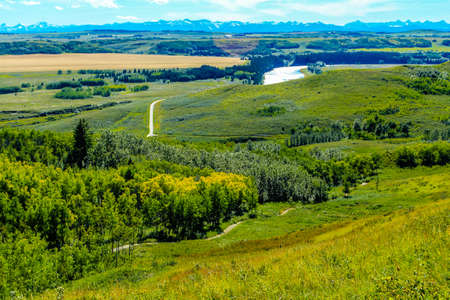 Farmers field adds a splash of colour to the ranch. Glenbow Ranch Provincial Recreation Area, Alberta, Canada