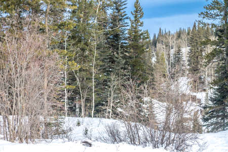 Winter has a hold on the park. Waiprous Creek Provincial Recreation Area, Alberta, Canada