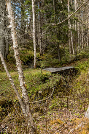 Small creeks make their way to the river. Sir Richard Squires Provincial Park, Newfoundland, Canada Stock Photo