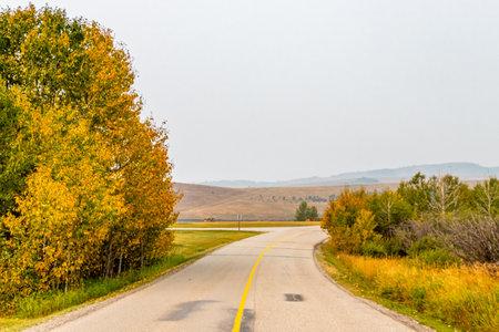 Fall colours start to settle into the bush. Chain Lakes Provincial Park, Alberta, Canada