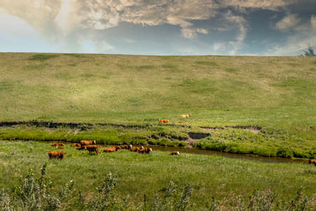 Farmers fields under cloudy skies with green grass Allingham Alberta Canada Banque d'images