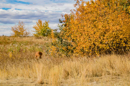 Fall colours on display in the fields around Calgary Banque d'images