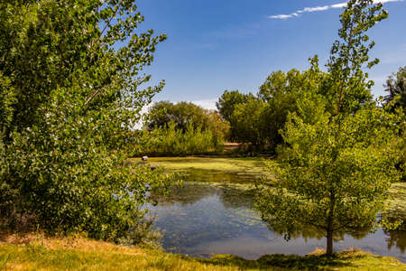 Peaceful pond in centre of town. Coledale, Alberta, Canada