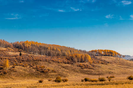 Fall colours in the valley. Ghost Land Use Area, Alberta, Canada Banque d'images