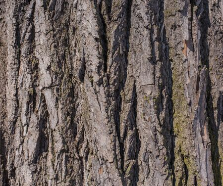 Deep texture from tree bark photo