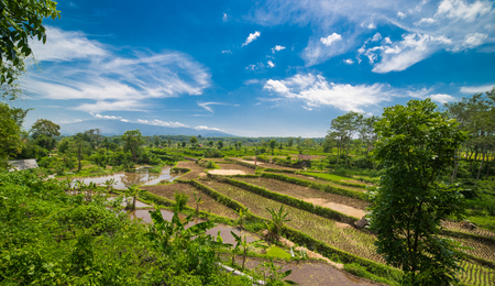 Wide green rice terraces at Bali