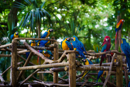 a lot of blue-and-yellow macaws and red aras sitting on the branches in the forest Stock fotó
