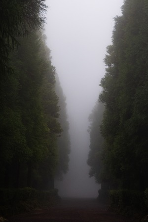 a path in dreamy forest with lot of fog 写真素材