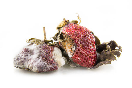 mildew: rotten strawberry with mildew isolated on white Stock Photo