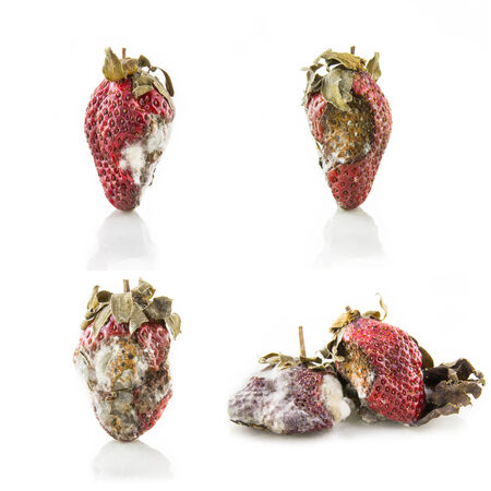 mildew: collection of rotten strawberry with mildew isolated on white
