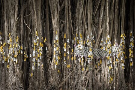 revere: Close up of banyan tree roots with sacrifice, Thai culture