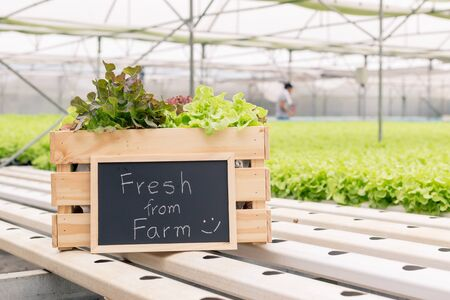 vegetable in the basket with chalk board in the hydroponic farm green house. Stockfoto
