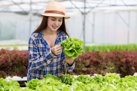 Young beautiful Asian woman holding hydroponic vegetable from her farm.