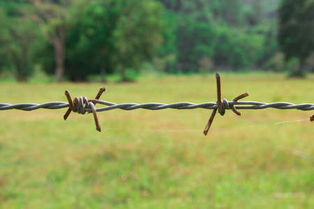 Metal barbed wire in closeup photo