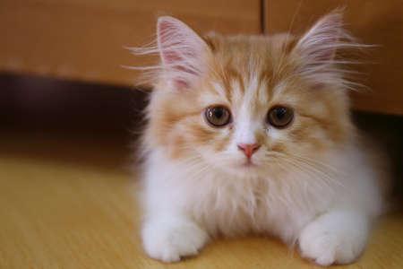 cat pet kitty