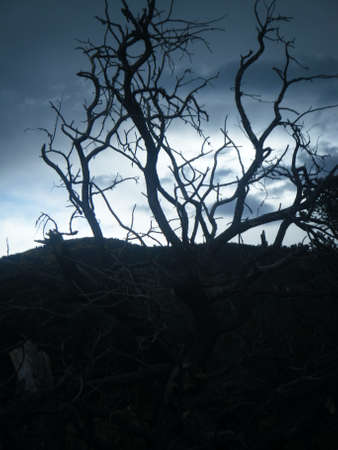 Spooky Tree Фото со стока