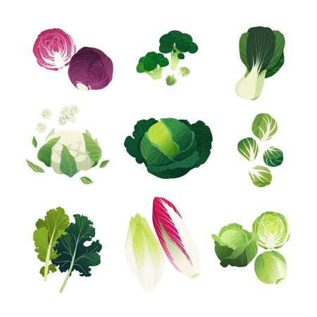 Illustraties koolcollectie met broccoli, bokchoy, bloemkool, savooiekool, spruitjes, boerenkool, andijvie en groene kool