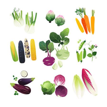 Illustraties groenten set met venkel, artisjok, wortel, maïs stengels, koolrabi, erwten, aubergine, kool en andijvie sla Stockfoto - 88352116