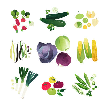 Clip art vegetables set with radish, zucchini, physalis, beans, cabbage, corn, leek onion, tomato and okra Ilustração
