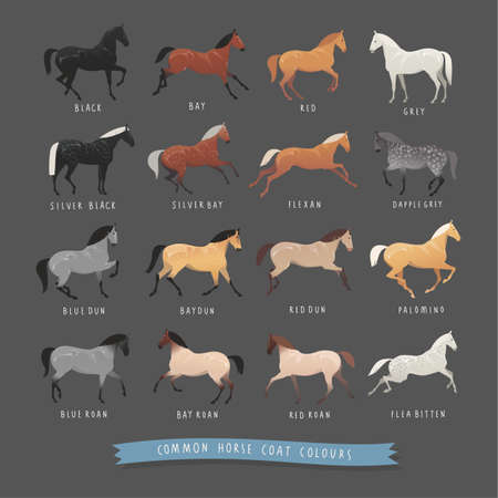 Common horse coat colours such as black and bay, silver gene horse and dapple grey horse, roan and dun coat horse and others